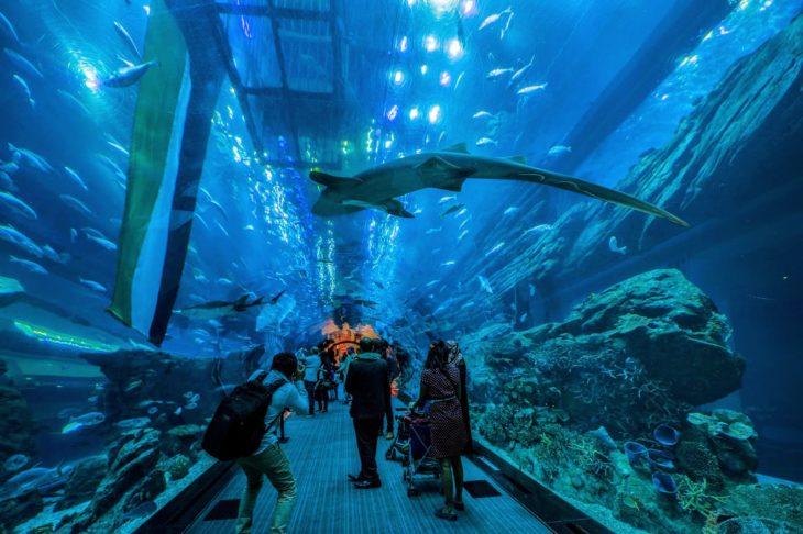 Достопримечательности Англии - Лондонский аквариум