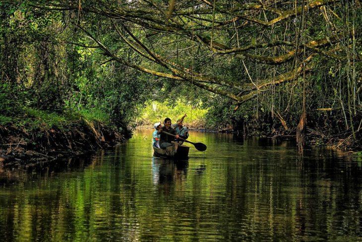 Идея для путешествий - джунгли Амазонки