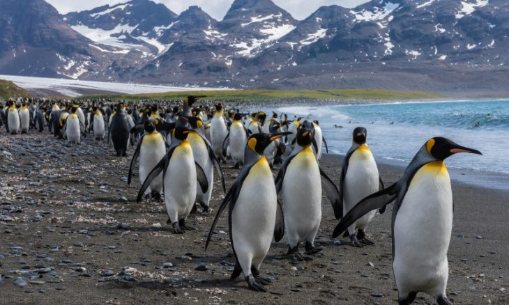 Идея для путешествий - покорить пингвина