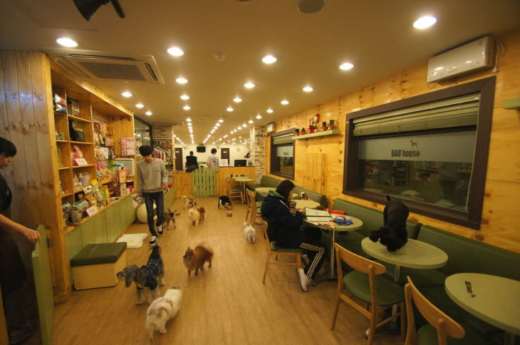 Кафе Бау Хау в Сеуле