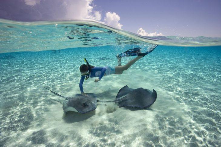 скаты на карибских островах