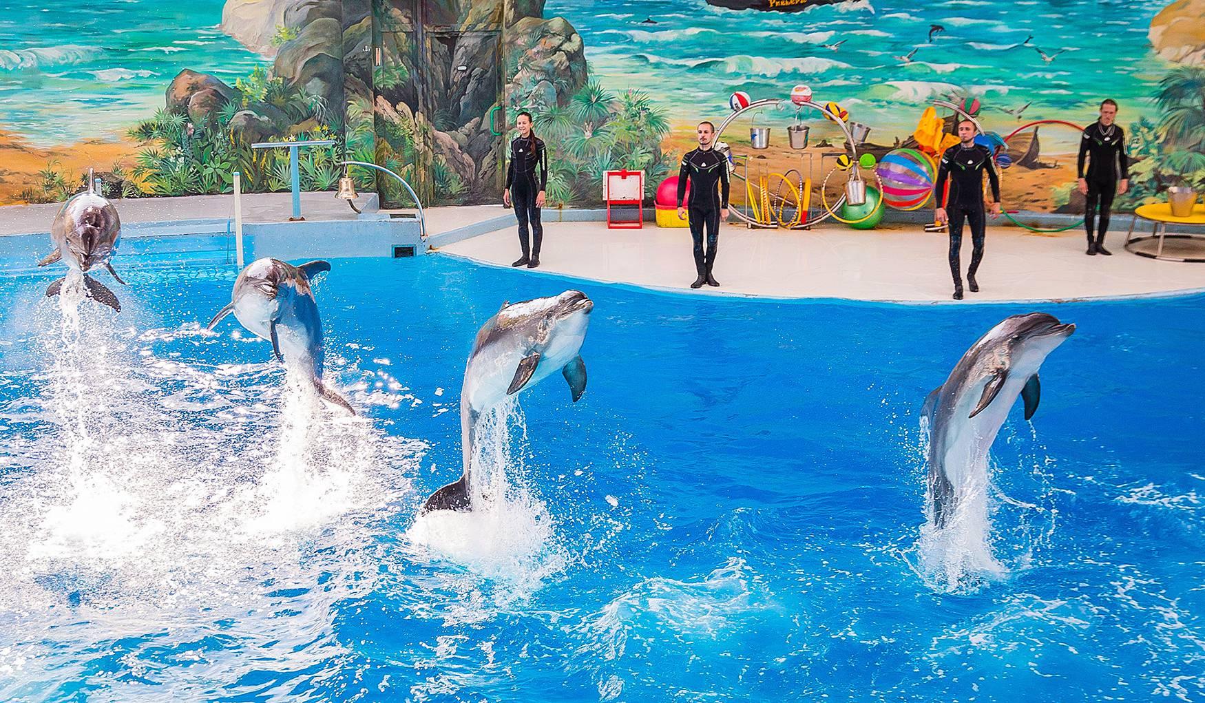 Дельфинарий Парка Ривьера (Сочи, Россия) - авторский обзор, часы работы,  цены, фото | Коллекция Кидпассаж