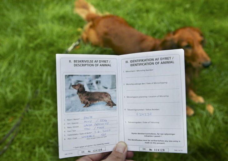 Документы для путешествий с животными