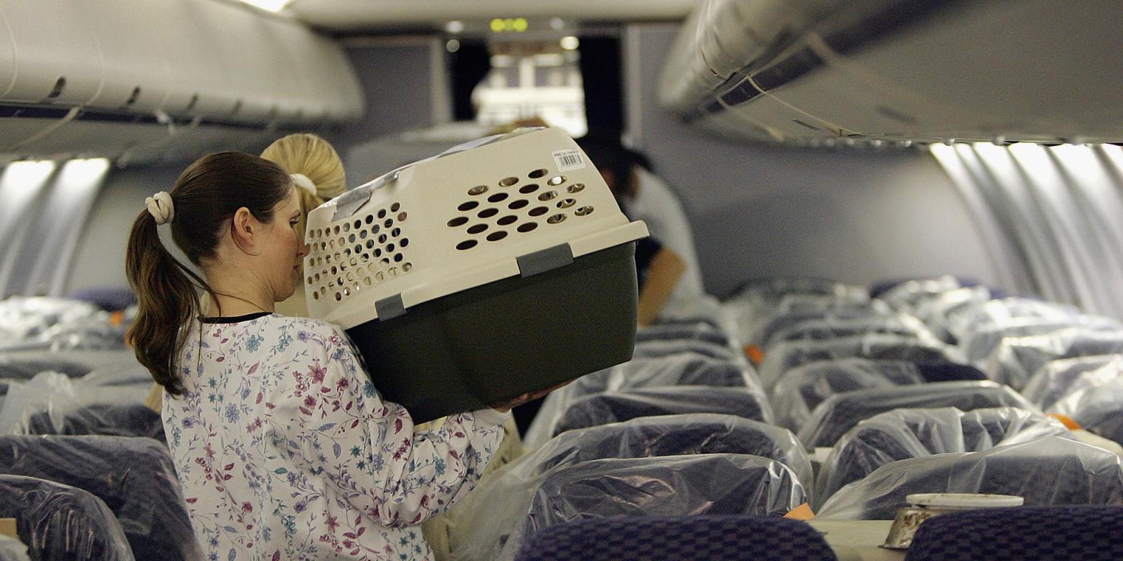 Как перевезти кошку в самолете по России и за границу: подробная инструкция и правила