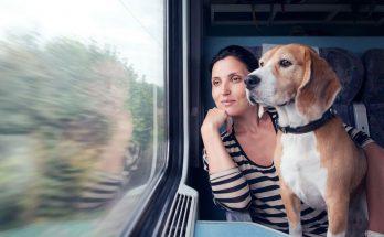 Как перевезти собаку в поезде
