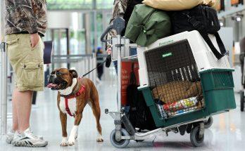 Как перевезти собаку в самолете по России и за границу