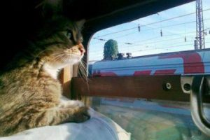 О правилах перевозки в поездах различного типа