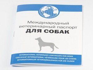 Оформляем необходимые документы для собаки