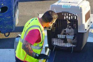 Перелет собаки в грузовом отсеке