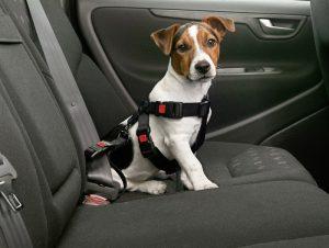 Перевозка собаки в салоне машины