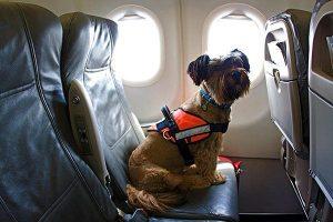 Перевозка в салоне самолета