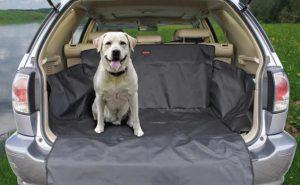 Подготовка к первой поездке в машине