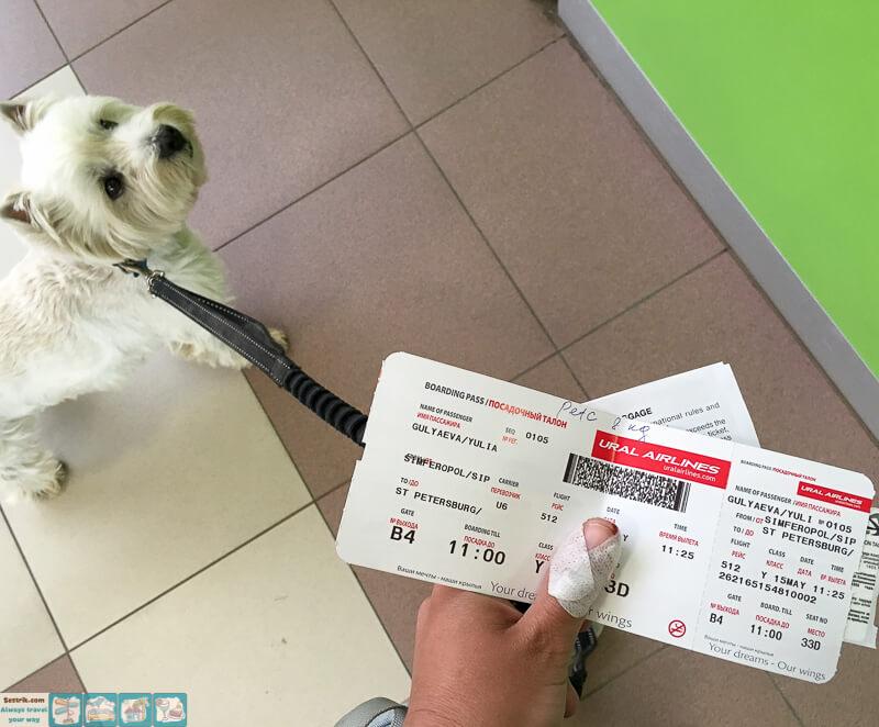 Покупка билетов на авиарейс для собак