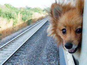 Правила перевозки мелких собак