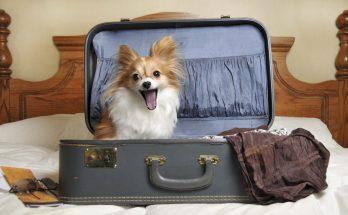 Путешествия с животными