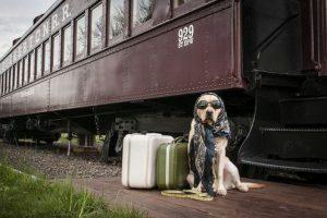 Сколько стоит собачий билет
