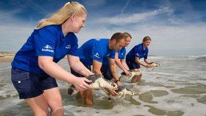Волонтерская программа Turtle Teams